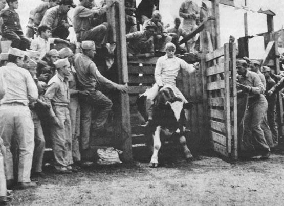 Second Division Rodeo allowed Marines a temporary diversion from storming beaches, although riding wild steers was no easy feat.